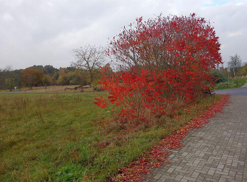 november-rain3