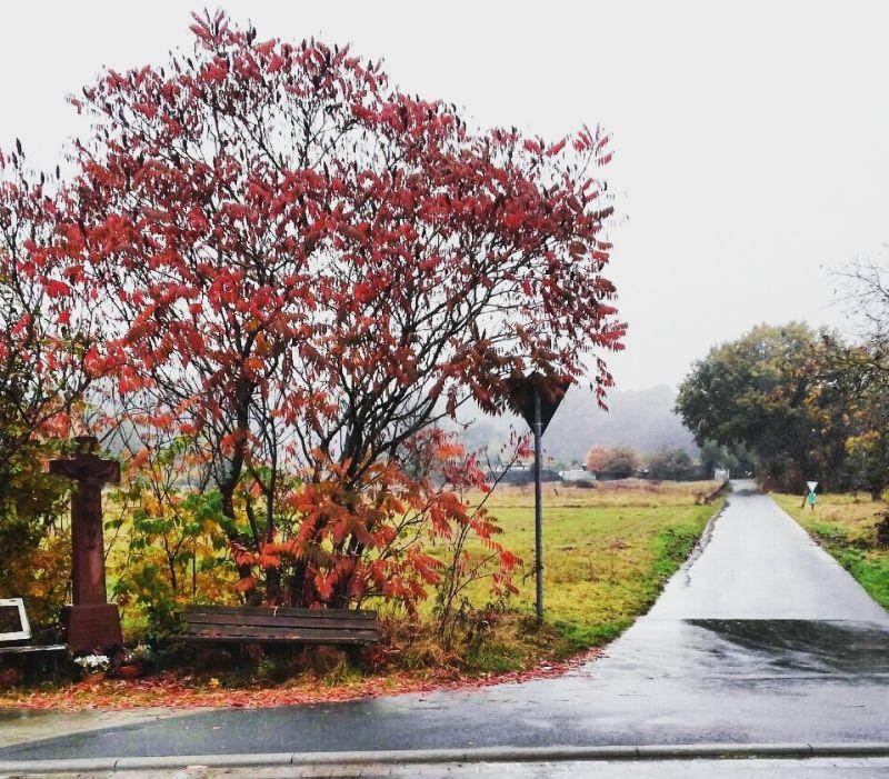 november-rain8